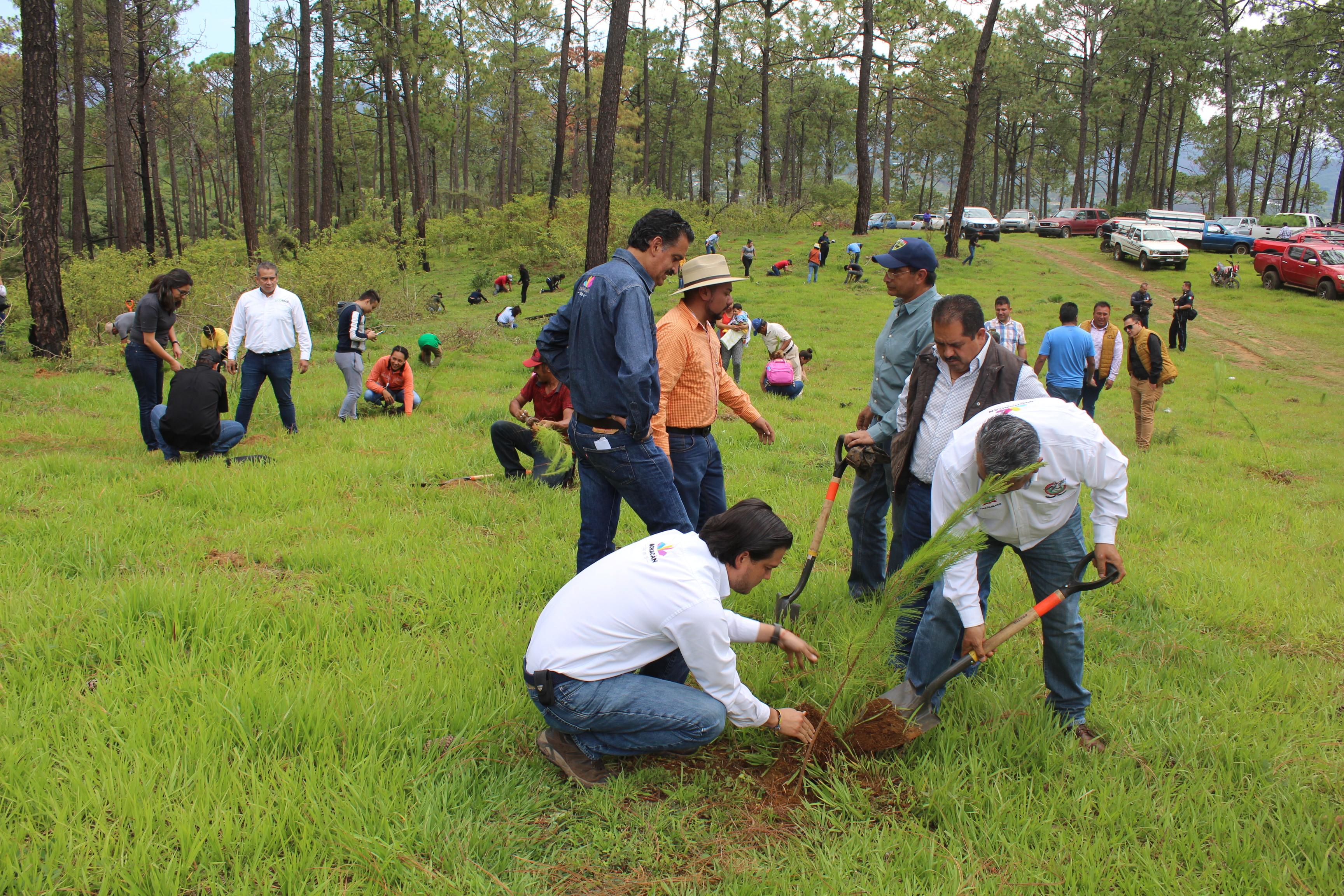 En Tacámbaro arranca Temporada  de Reforestación Estatal  2019.